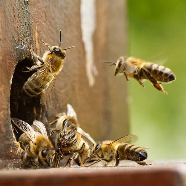 La Tejedora de Redes abejas colmena